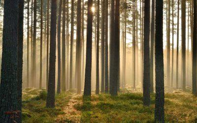 10 Tipps und Infos für die Reise nach Finnland