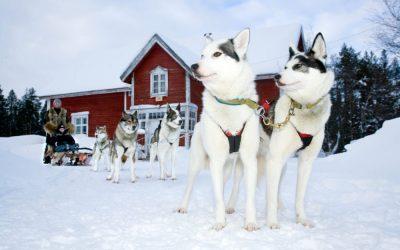 Warum man im Winter nach Finnland reisen sollte