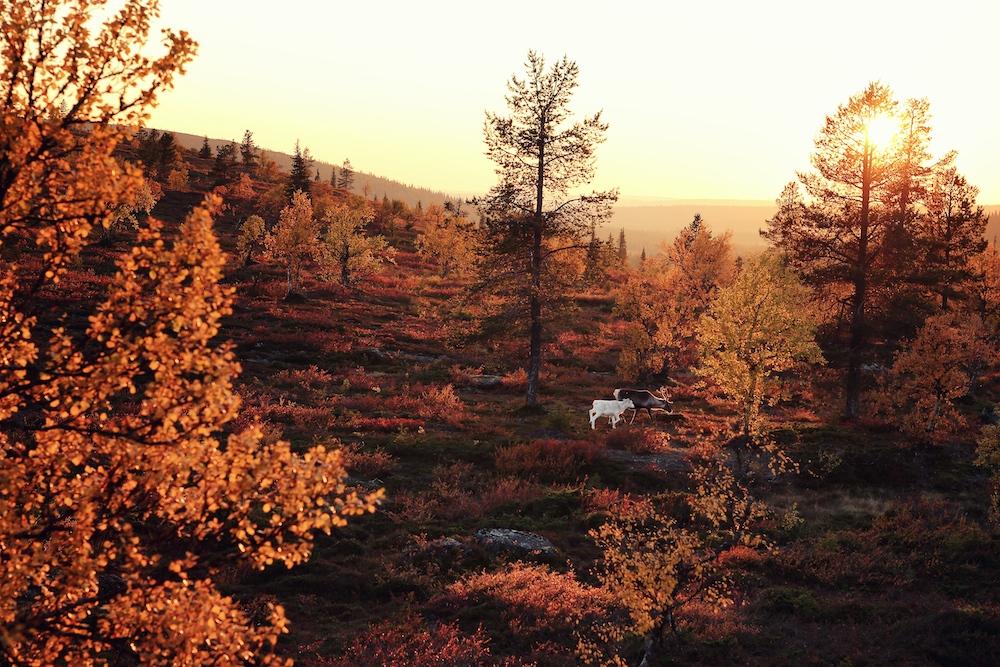 Ruska Saison Finnland
