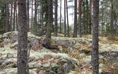 Finnlands Nationalparks entdecken