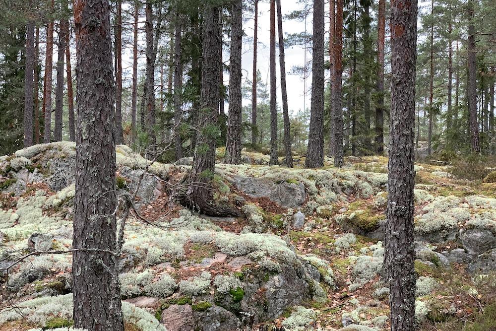 Finnlands Nationalparks entdecken