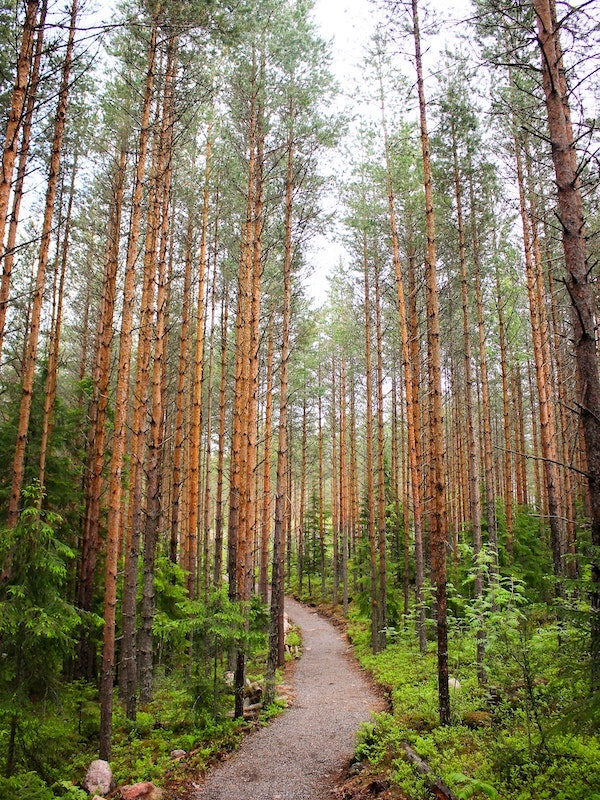 Finnland Wald © Unsplash